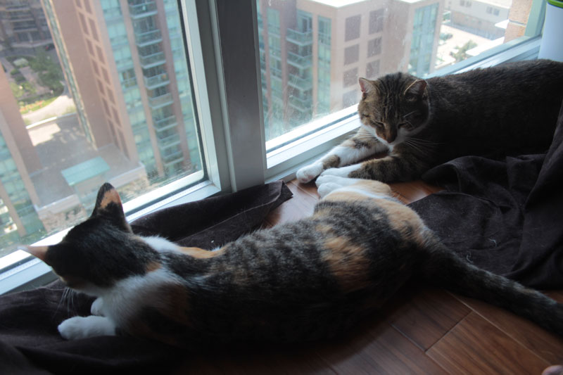 beau-and-kalista-by-window-2