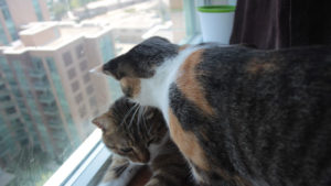 Why Do Cats Lick & Groom Each Other? Does It Mean They like Each Other?