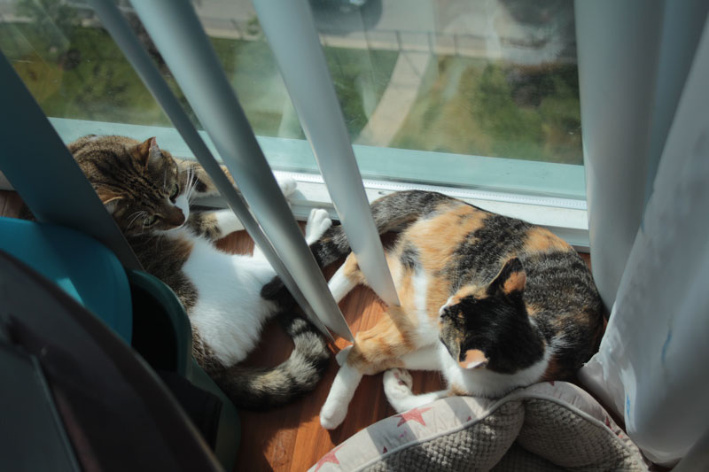 beau-and-kalista-by-window1