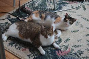 beau-sitting-with-kalista