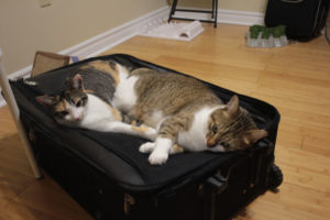 kalista-and-beau-on-suitcase