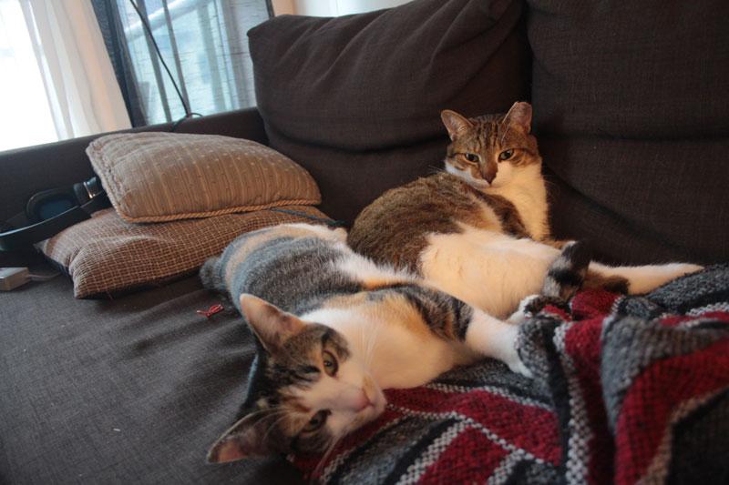 kalista-cuddling-beau