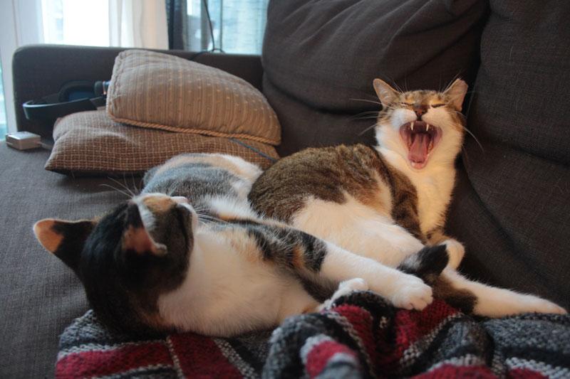 kalista-cuddling-beau-yawn