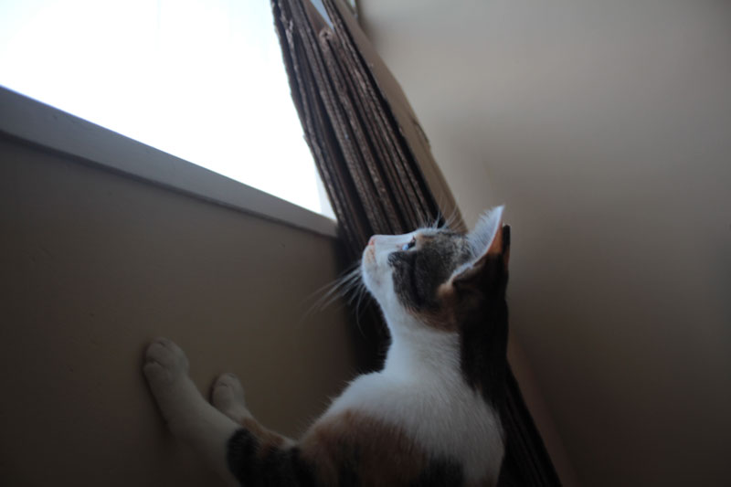 kalista-trying-to-look-out-window
