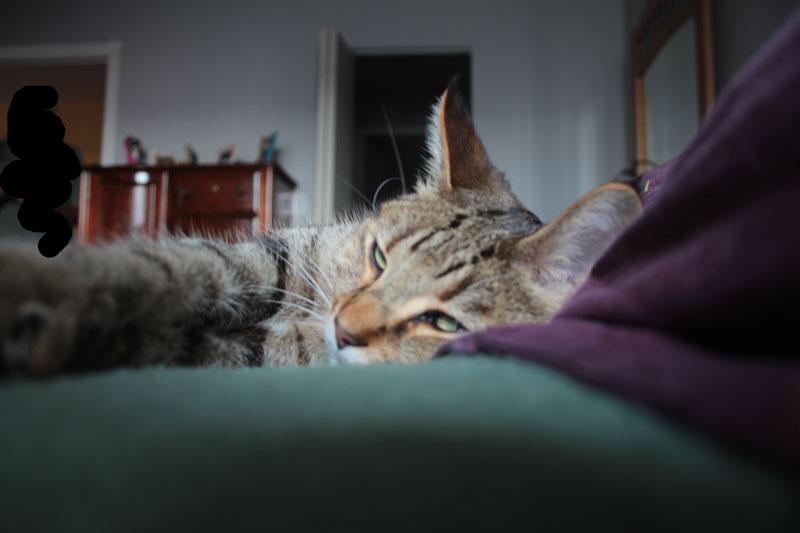 walker-sleeping-in-bed