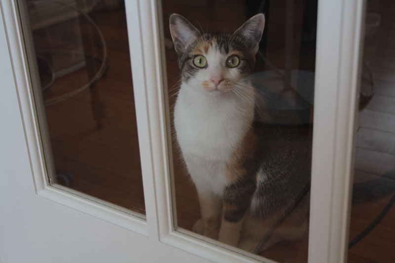 kalista-by-door-window