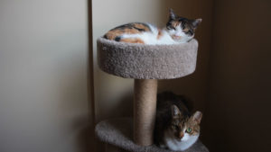 REVIEW: AmazonBasics Cat Tree