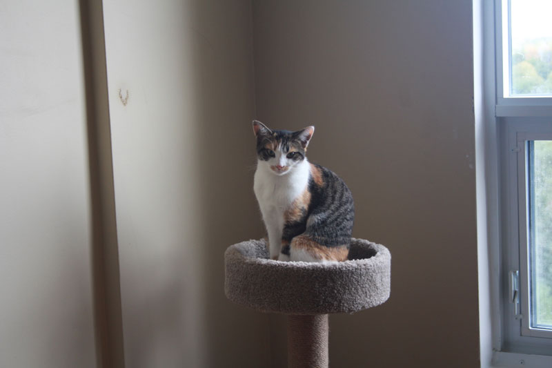 kalista-sitting-on-cat-tree