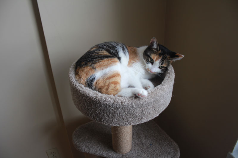 kalista-sleeping-in-cat-tree