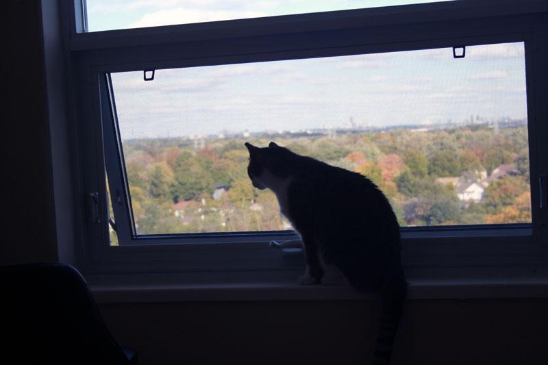 beau-sitting-at-window