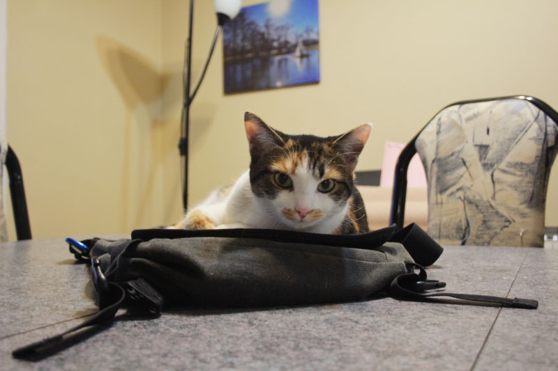 kalista-sitting-on-bag-table
