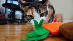 We Got Some Adorable Homemade Catnip Toys From Our Friend! (Cute Cat Photos & Video)