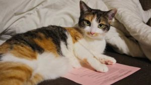 Why Do Cats Lay on Paper? 6 Reasons Why Cats like Paper