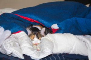 kalista-cuddled-in-bed