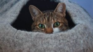 The Cats May Be Fighting over Their Beds Now (Cute Cat Story)