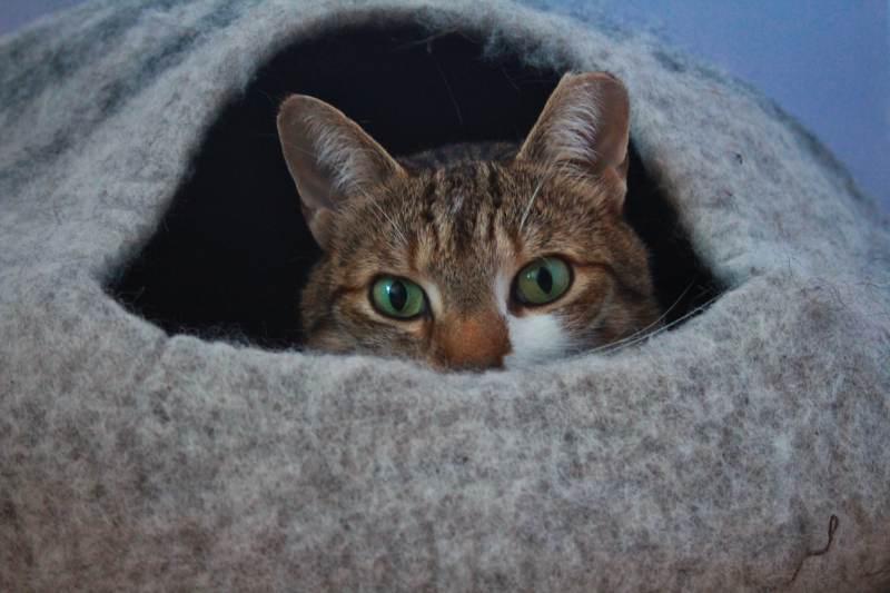 beau-meowfia-cat-bed