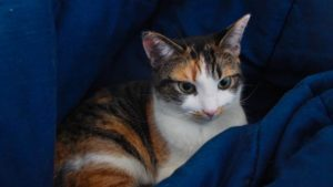 Kalista, Our Cat, Is a Sweetheart Who Is Always Excited to See Us (Cute Cat Story)