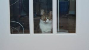 Why Does My Cat Hate Closed Doors? Why Won't My Cat Stop Meowing?