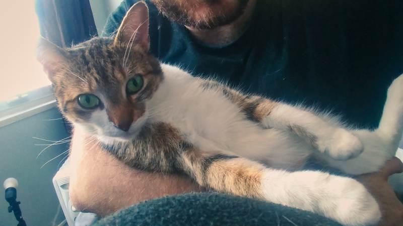 beau-lying-in-my-lap