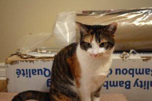 kalista-cardboard-chewing