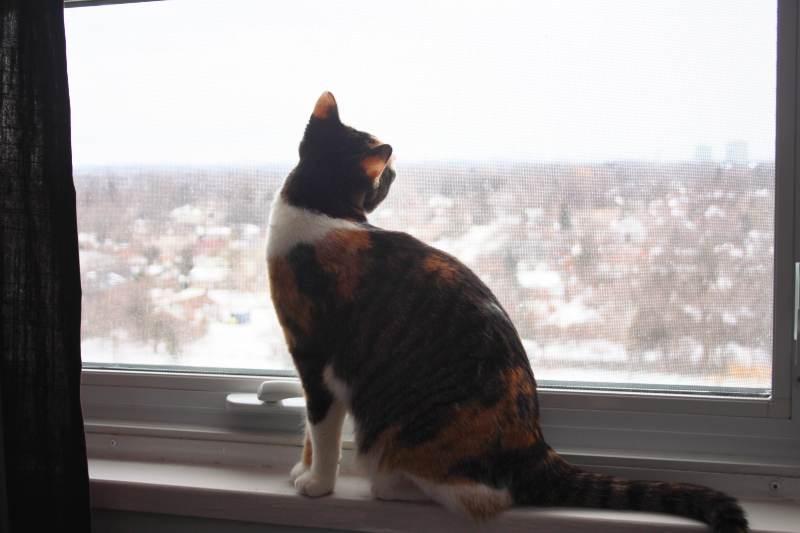 kalista-window-looking-snow