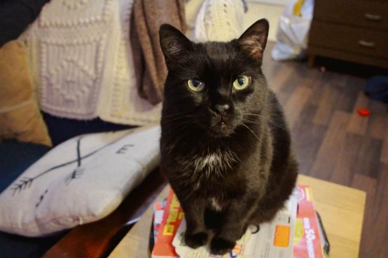 mel-standing-black-cat-desk-table