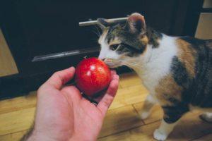 kalista-apple