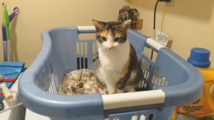 Why Do Cats Sleep in Laundry Baskets? Do Cats like Dirty Clothes? Does It Mean My Cat Loves Me?
