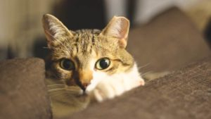 What Does It Mean When Your Cat Stares at You? How to Understand What Your Cat Is Saying