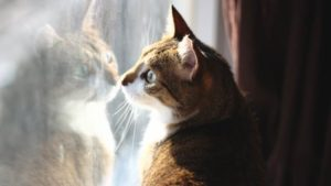 Winter Is Almost over and the Cats Love It! (Cute Cat Story)