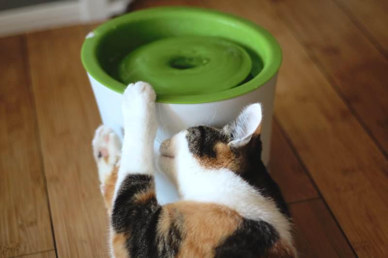 kalista-rubbing-cat-water-fountain