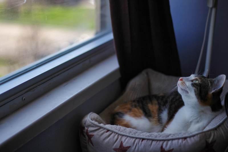 kalista-windowsill-bed