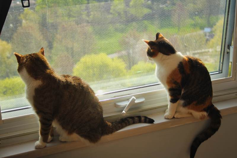 beau-and-kalista-window-looking-out