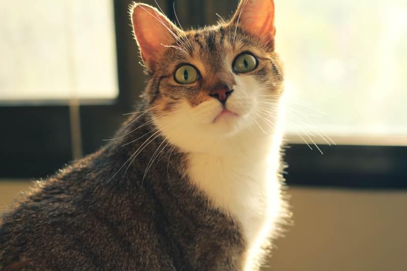 beau-staring-eyes-open-closeup