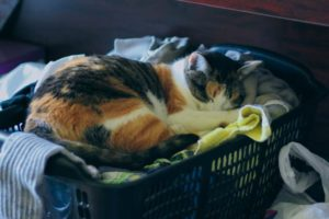 kalista-sleeping-in-laundry-basket