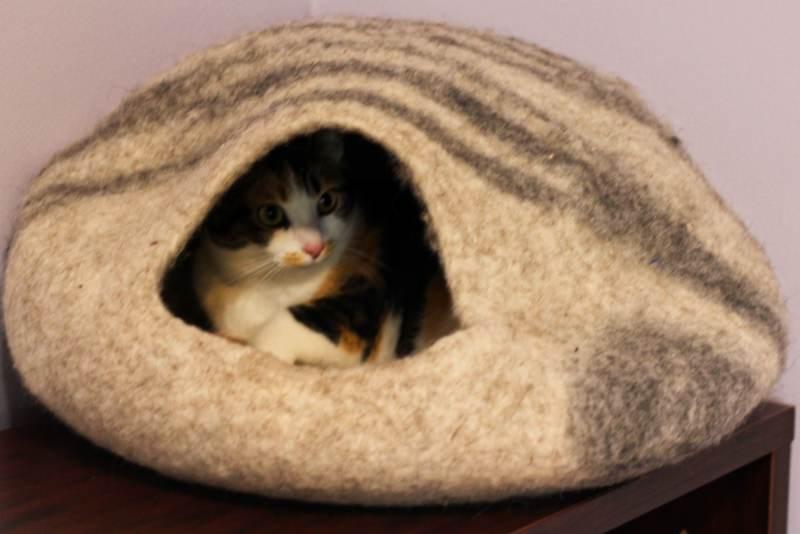 kalista-sleeping-in-meowfia-bed
