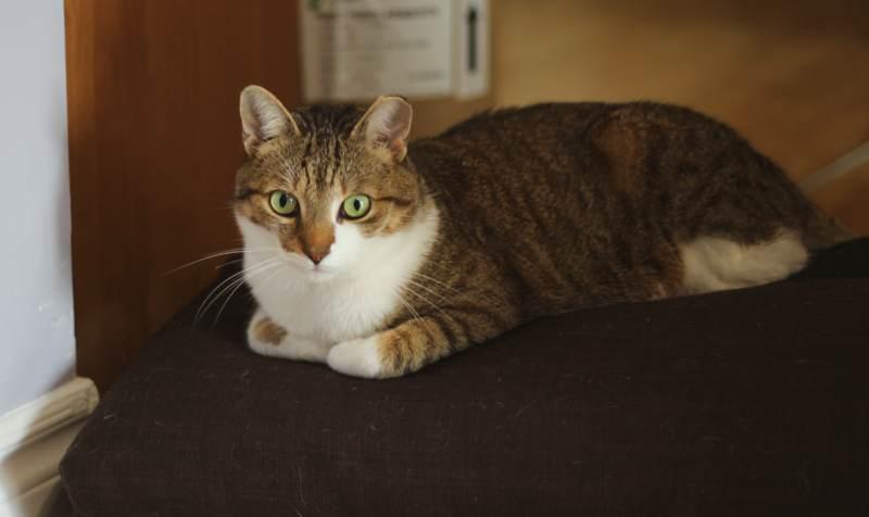 beau-sitting-on-cushion