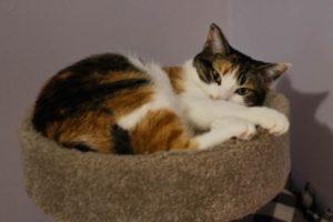 kalista-cat-tree-cute-snuggling-close-up