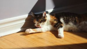 Is Dawn Dish Soap Safe for Cats? Can It Kill Fleas?