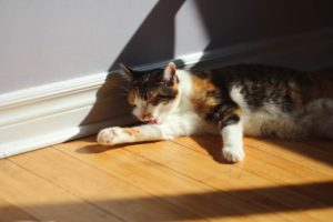 kalista-laying-in-sunlight-stretching-out