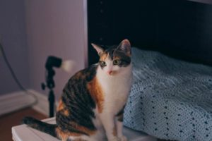 kalista-standing-by-hutch-cute-fur-calico