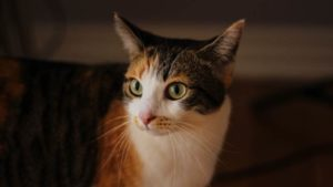My Cat Stinks! Why Your Cat Smells & What You Can Do to Fix It!