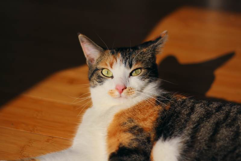kalista-staring-sunlight-small-eyes-bright