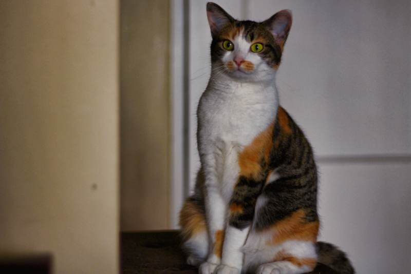 kalista-sitting-on-bench-calico-cute