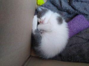 cleo-in-cardboard-box