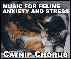 catnip-chorus-advertisment