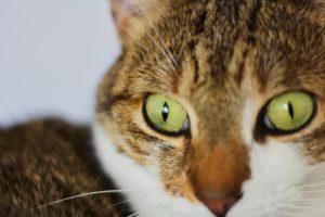 beau-close-up-eyes