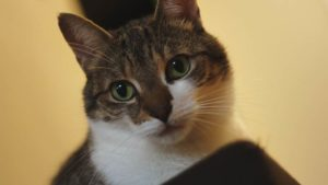 Can Cats See in the Dark? Understanding Cat Eyes