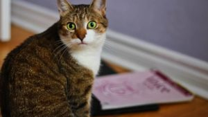 Can Cats Eat Eggs? Are Eggs Safe for Cats to Eat?