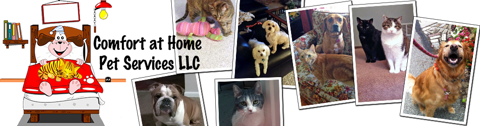 Comfort at Home Pet Services LLC